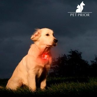 Targhetta LED per collare cani
