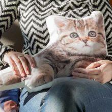 Cuscino Decorativo Pets